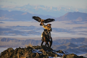 Eagle hunting in mongolia.