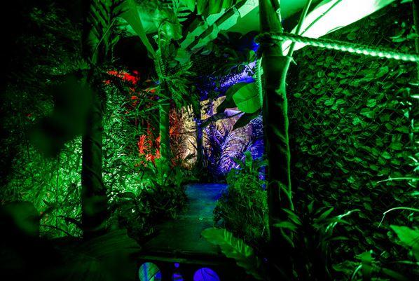Jungle area.JPG